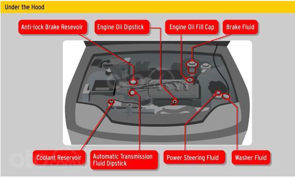 10 điều nên tuân thủ khi xe ô tô bị ngập nước - Kiểm tra các loại dung dịch trên xe