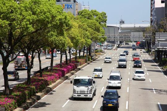 Cách thi bằng lái xe ô tô ở Nhật